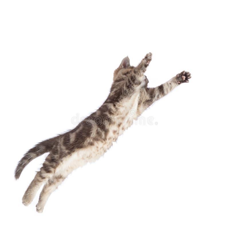 Chaton volant ou sautant de chat d'isolement sur le blanc photos libres de droits