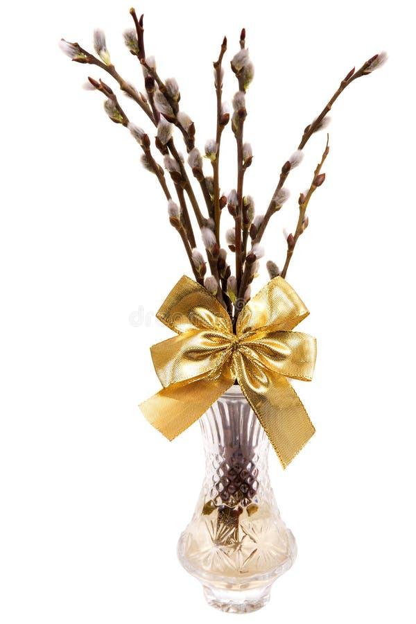 Chatons d'Easte avec le ruban d'or dans le vase d'isolement sur le fond blanc photographie stock
