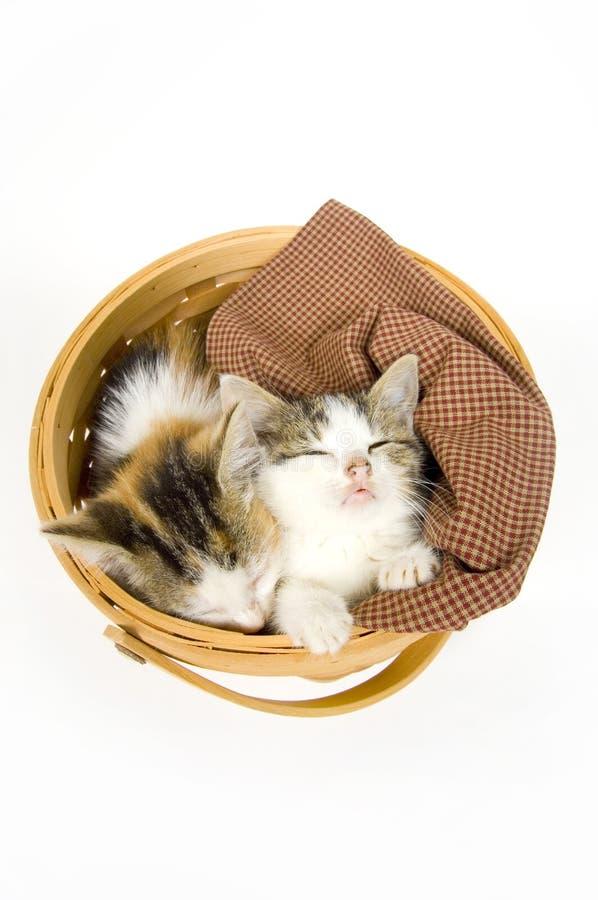 Chatons dormant dans un panier images stock