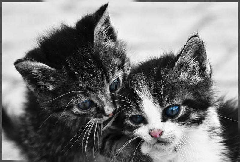 Chatons doux images stock