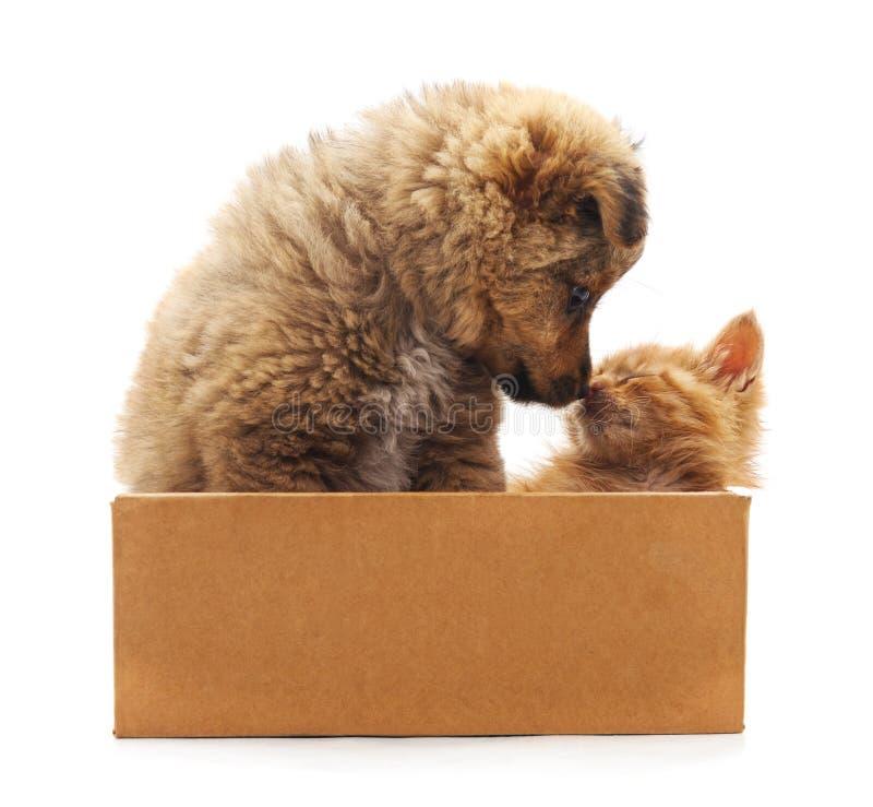 Chatons et chiot dans une boîte photos libres de droits