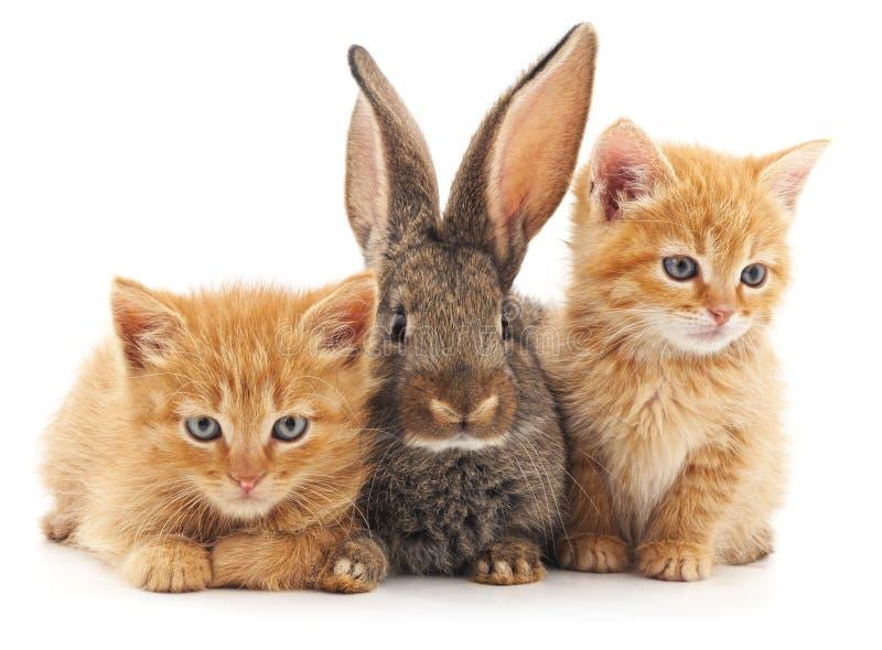 Chatons et lapin photographie stock libre de droits
