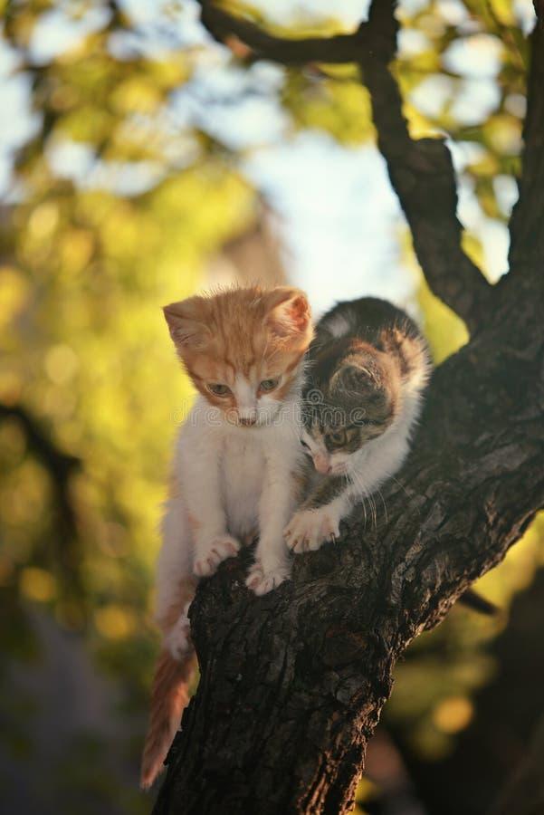 Chatons jouant dans l'arbre image libre de droits