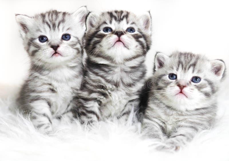 Chatons mignons sur un fond blanc Beau babi de chatons de peluche photo stock