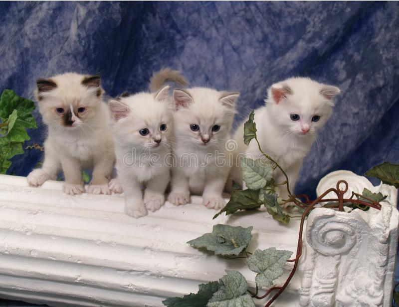 Chatons sur le pilier photo stock