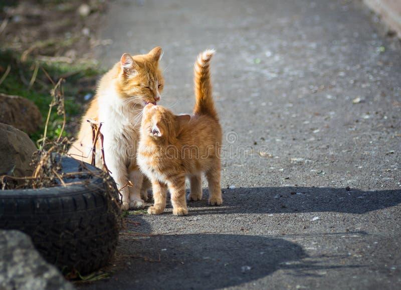 Chats égarés. photographie stock