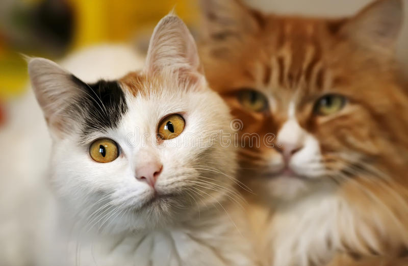 Chats d'amour image stock