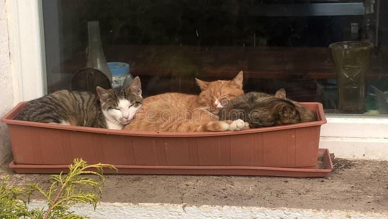Chats dans le pot de fleur photographie stock