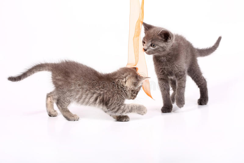 Chats de chat photo stock