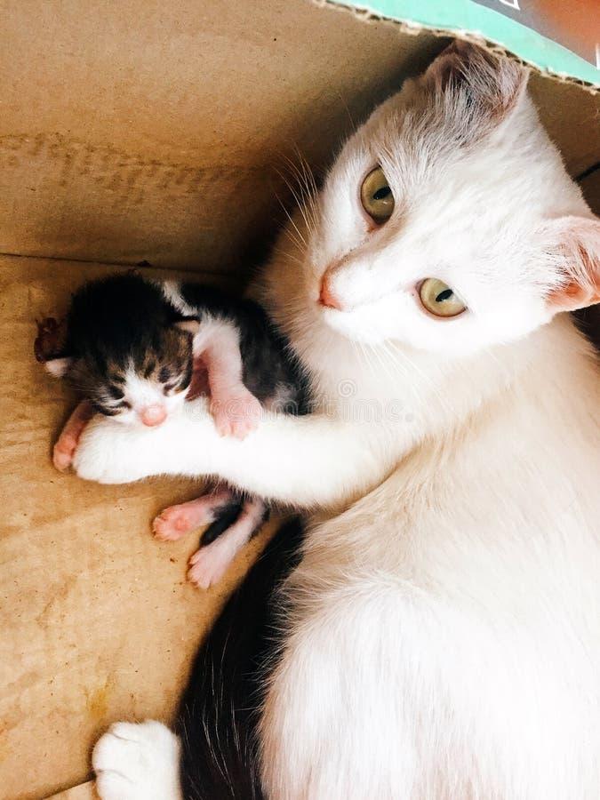 Chats de mère et de fils photos stock