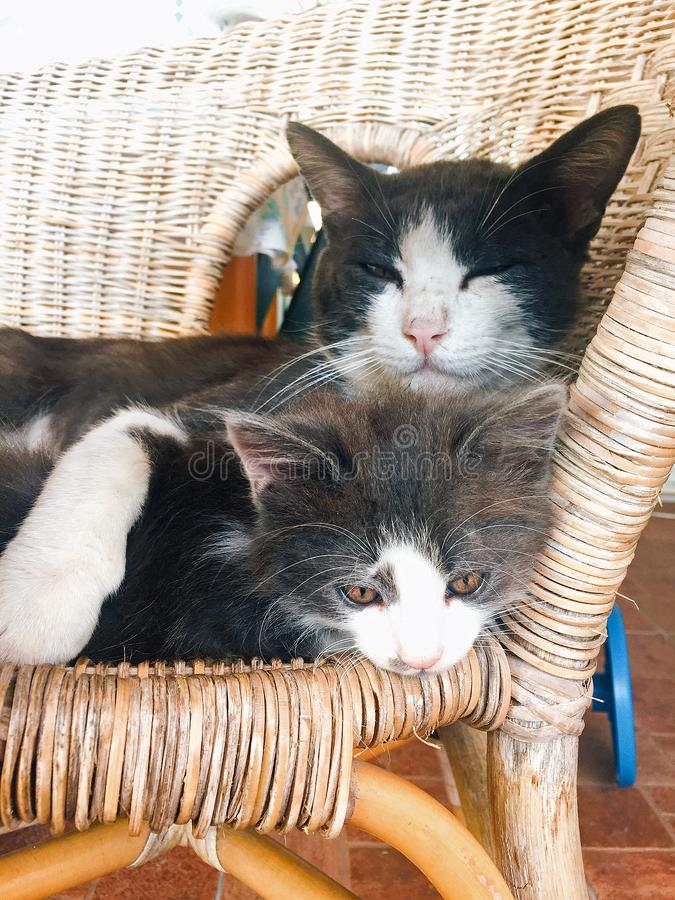 Chats de père et de fils photo libre de droits