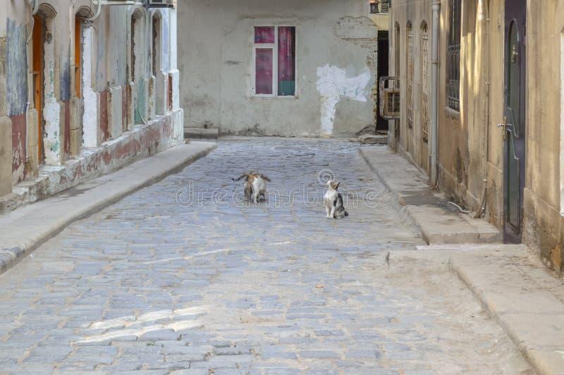Chats de rue dans la vieille ville Bakou photo libre de droits