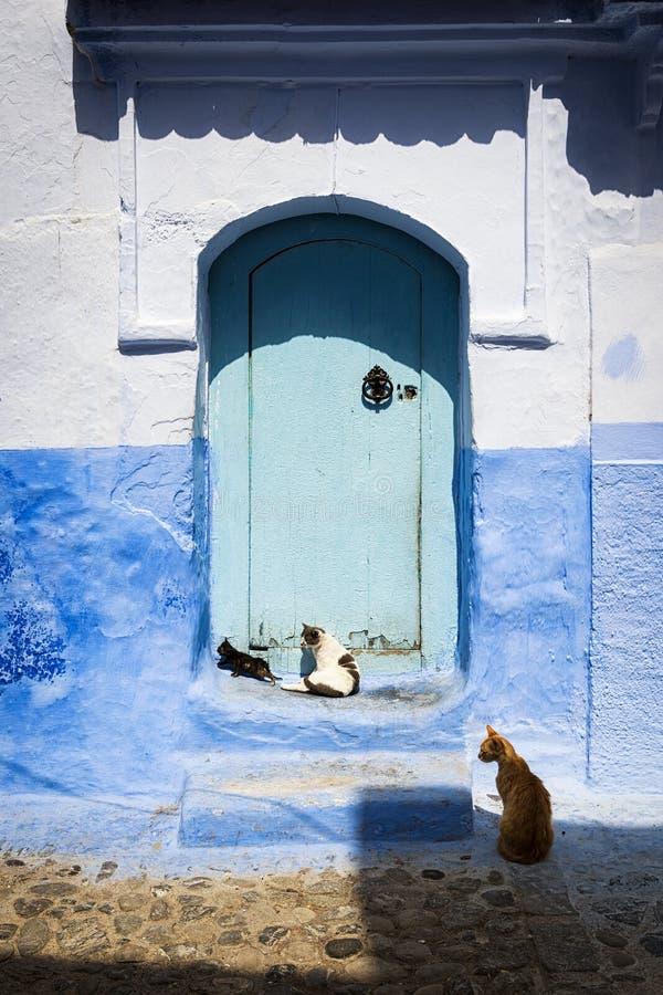 Chats devant une porte dans Chefchaouen, Maroc image stock