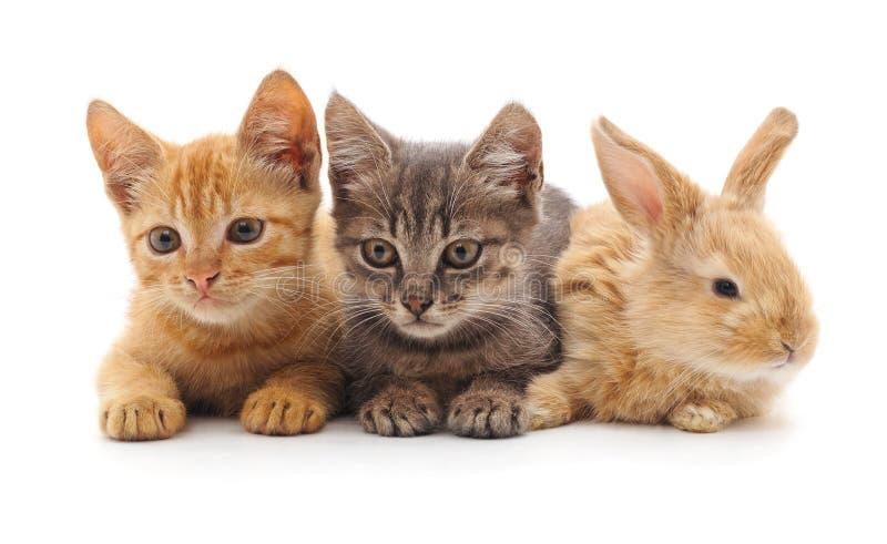 Chats et lapin photos libres de droits