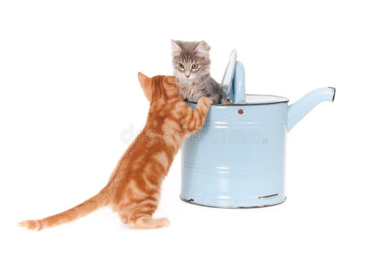 Chats et une boîte d'arrosage photographie stock