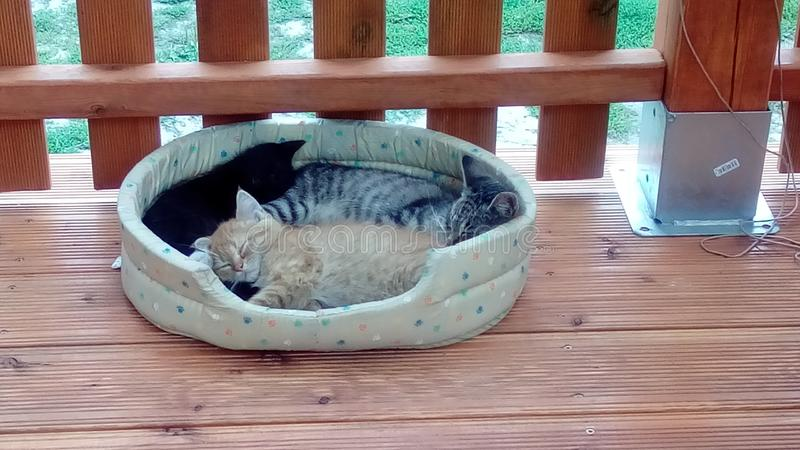 Chats fatigués de sommeil photographie stock libre de droits