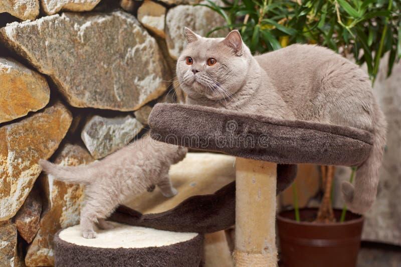 chats Père et fils Pièces de chaton photo stock