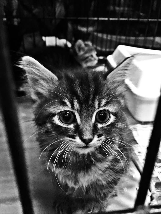 Chats perdus ses parents images libres de droits