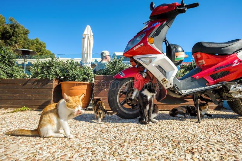 Chats près du scooter photos libres de droits