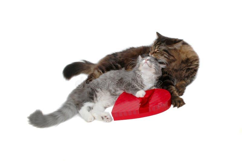 Chats romantiques photo libre de droits
