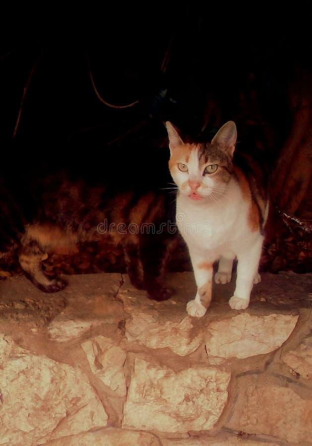 Chats sauvages photographie stock libre de droits