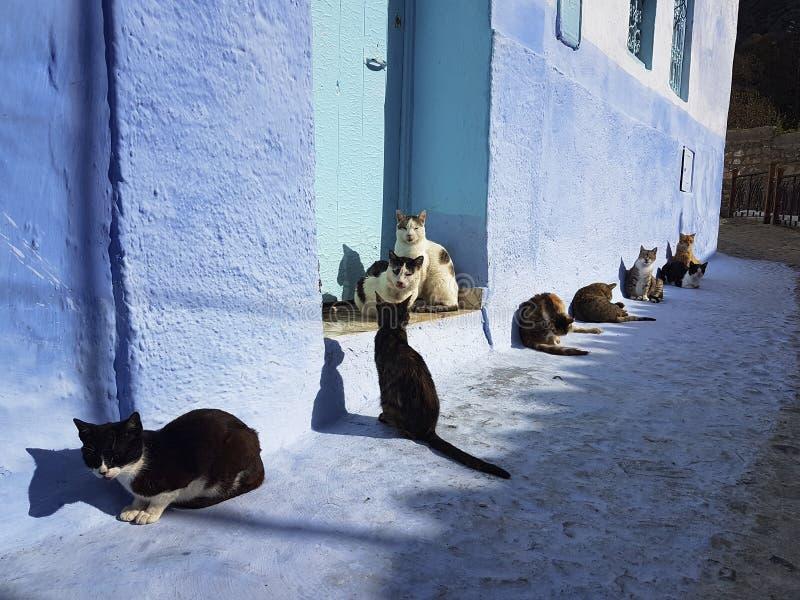 Chats se dorant au soleil dans Chefchaouen photos libres de droits