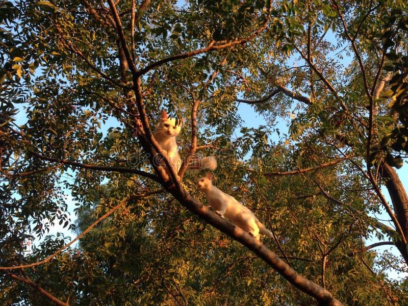 Chats sur l'arbre photo stock