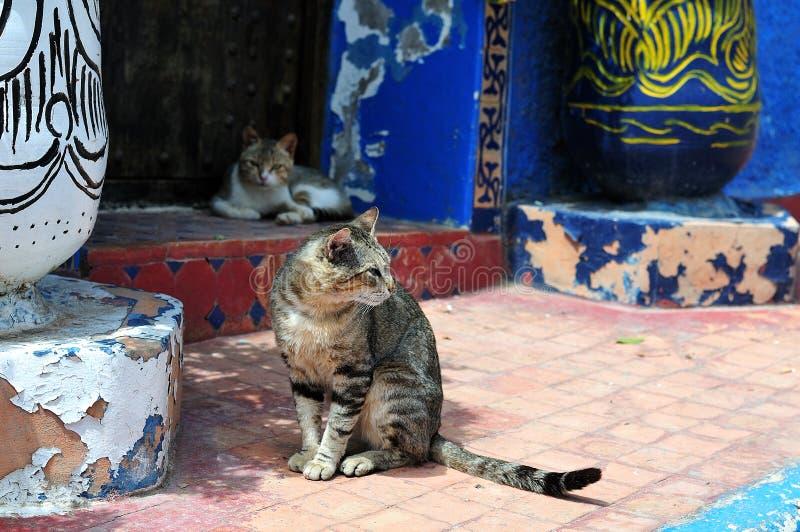 Chats sur l'entrée de la maison marocaine traditionnelle images stock