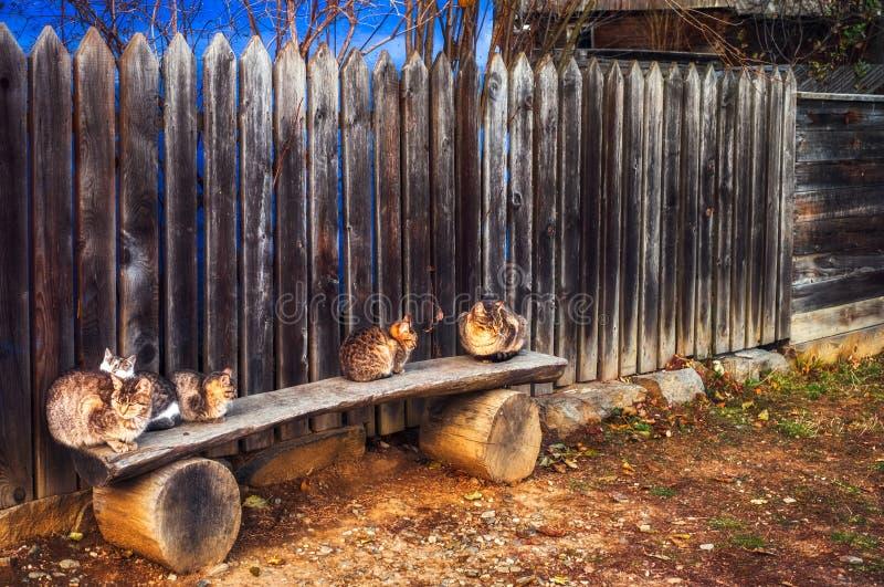 Chats sur le banc devant la maison de campagne images stock