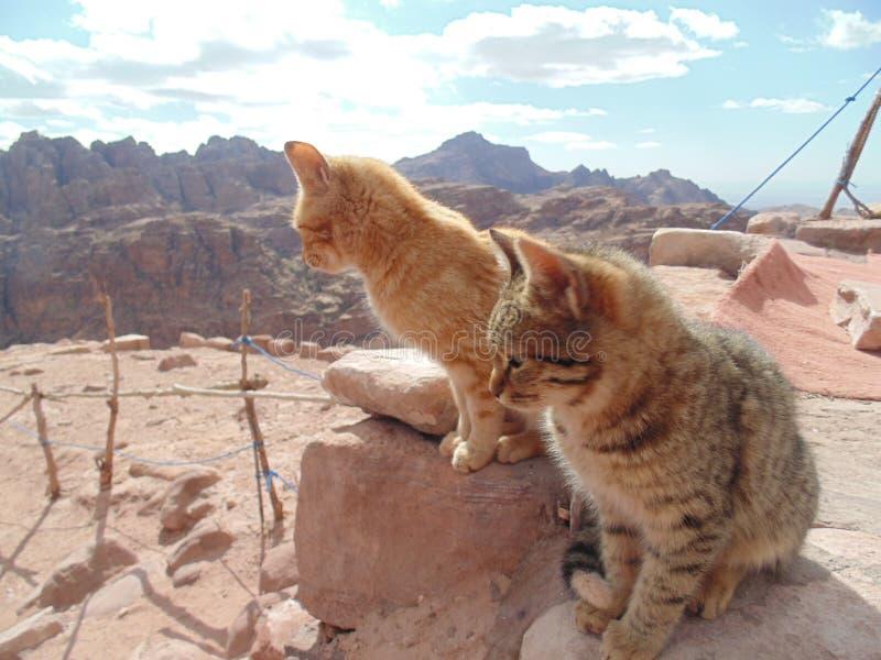 Chats sur le dessus du monde photographie stock