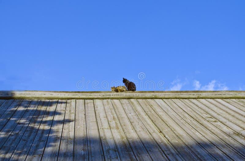 Chats sur le toit image stock