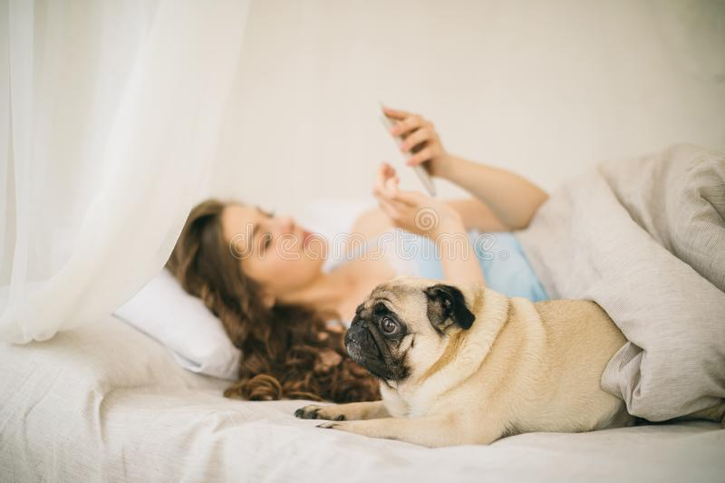 Chatting in bed with mobile phone and small dog. Relaxed sunny weekend morning in bed with pet royalty free stock photography