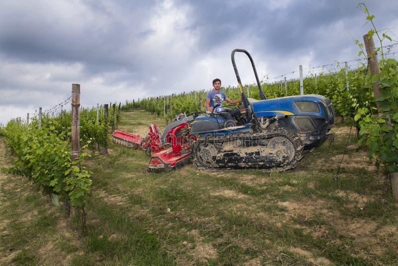 Chauffören på den spårade traktoren fungerar bland raderna av vingårdar i Langhen, och Roero kullar i Piedmont himlen är molniga  royaltyfri fotografi