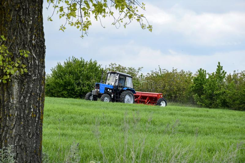 Chauff?r rullad traktor som g?dslar vintervete med mineraliska g?dningsmedel Matning av kornsk?rdar arkivfoto