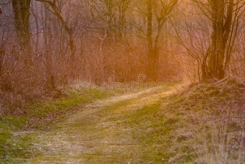 Chauffez la ruelle colorée de forêt images stock