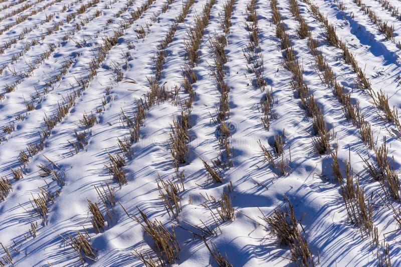 Chaume de paille en hiver image stock