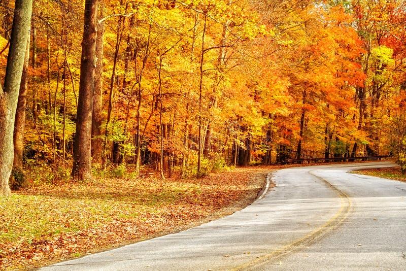 chaussée d'automne photos libres de droits
