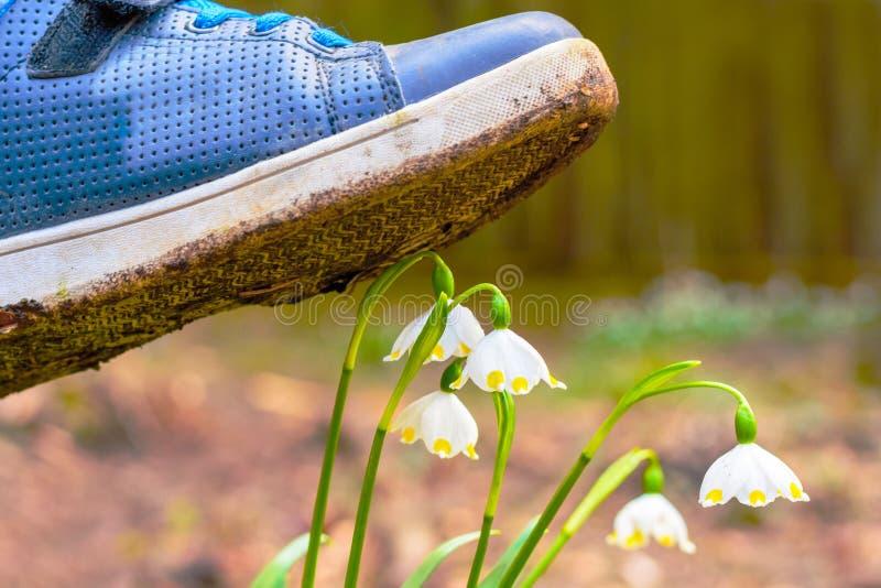 Chaussure marchant sur une fleur dans l'herbe image libre de droits