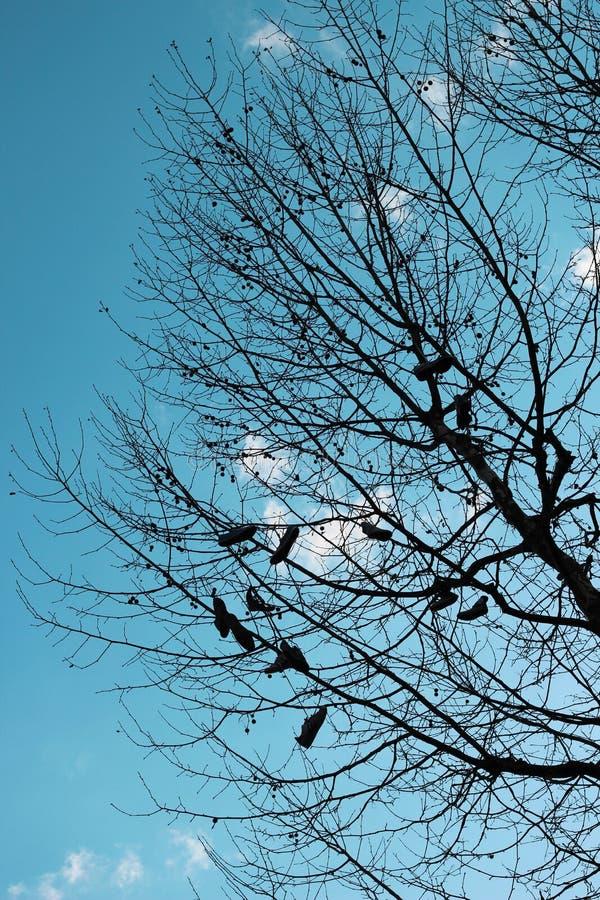 Chaussures accrochant haut en haut dans un arbre image stock