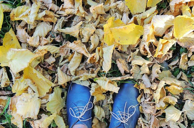 Chaussures bleu-foncé femelles sur l'herbe, fond jaune de feuilles d'automne photo libre de droits