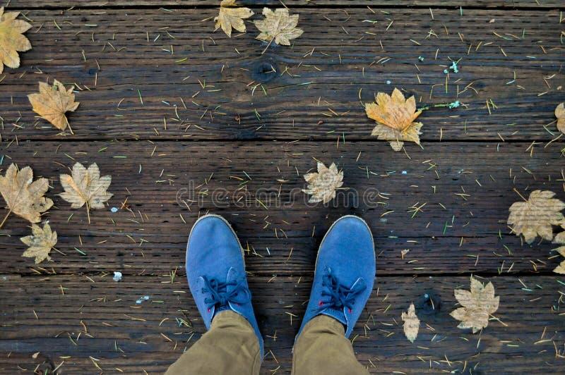 Chaussures bleues et feuilles tombées d'érable photos libres de droits