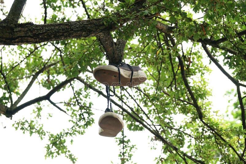 Chaussures de toile pendant de la branche d'arbre images stock