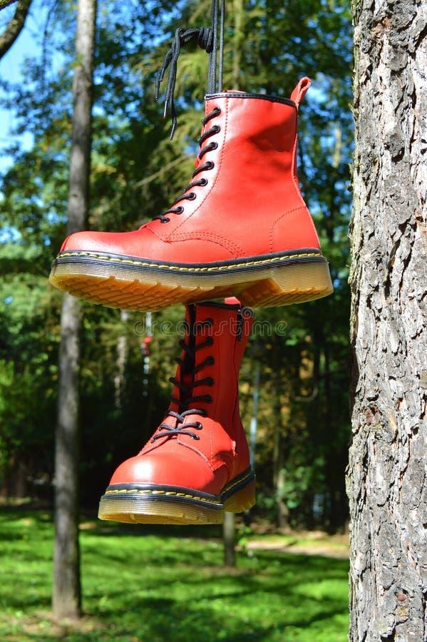 Chaussures rouges accrochant sur l'arbre photo libre de droits