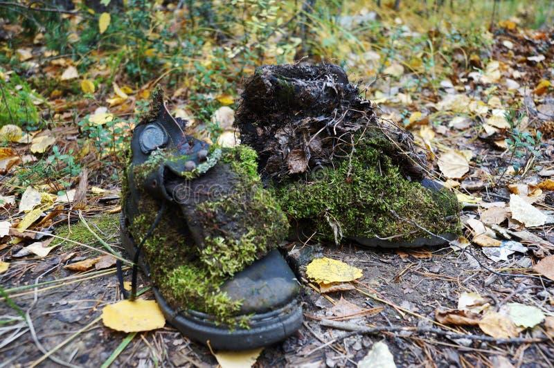 Chaussures Shrek. photos libres de droits