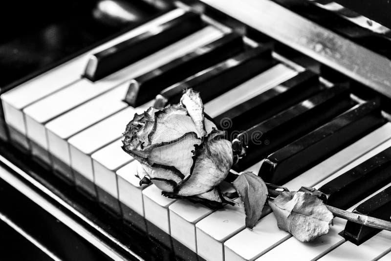 Chaves preto e branco do piano com rosa seca Conceito para o amor da música, para o compositor, inspiração musical foto de stock royalty free