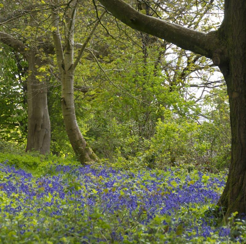 Chawton husarkiv, Hampshire arkivfoton