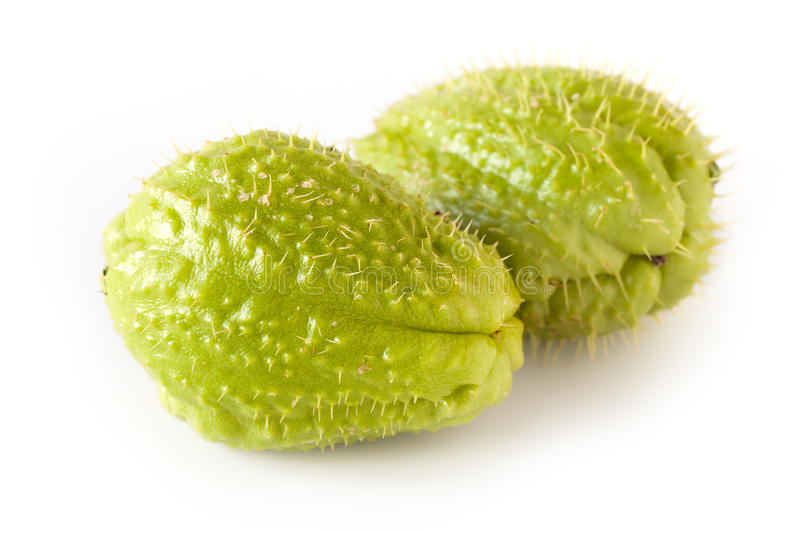 Chayote image stock