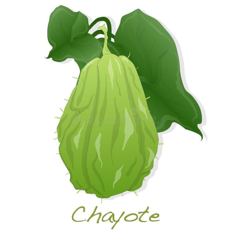 Chayote på vit bakgrund vektor illustrationer