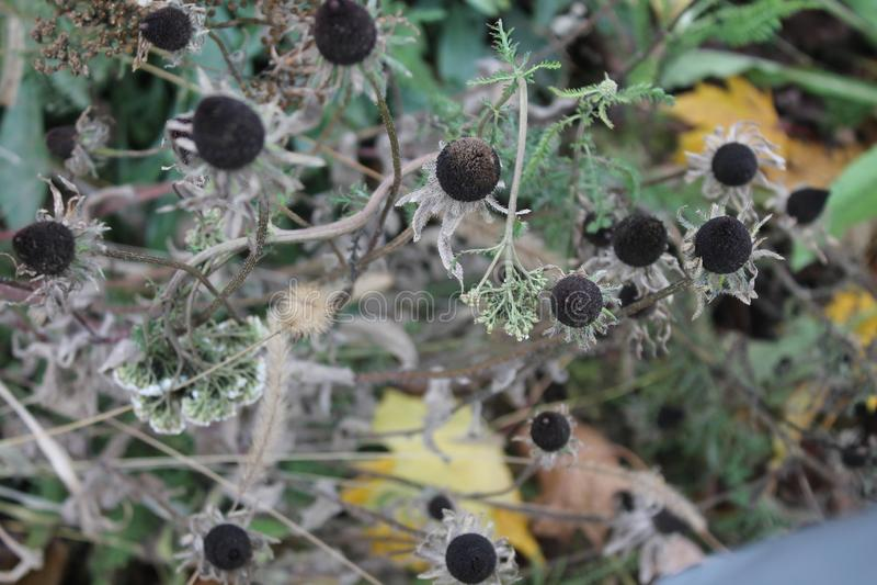 Che cosa è stato lasciato di questi era altrettanto interessante quanto il fiore dell'estate oltre fotografie stock