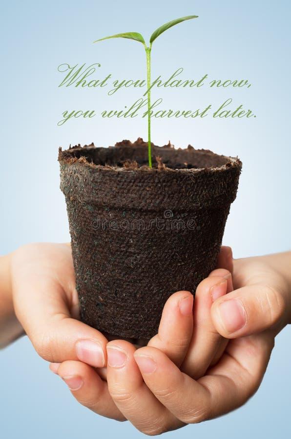 Che cosa ora piantate raccoglierete più successivamente fotografia stock libera da diritti